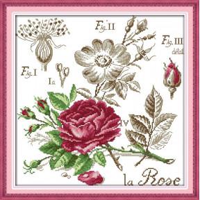 Ботаника. Роза Набор для вышивания крестом с печатью на ткани NKF H 526